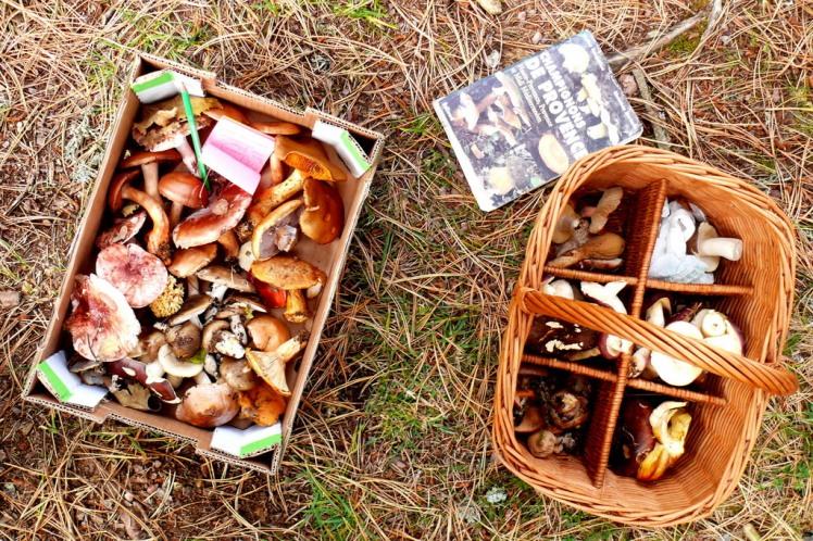 Fête aux champignons du Tambourinaire