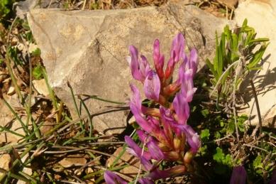 2016-05-15-10h41m35_orchidees-de-leoux
