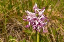 2016-05-15-11h47m27_orchidees-de-leoux