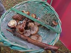 Faute de champignons, on ramasse tout ce qui traîne